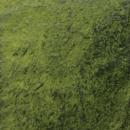 Python Green Endura Faux Fusion Concrete Stain