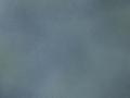 18_black_-_white_kiwi_v2